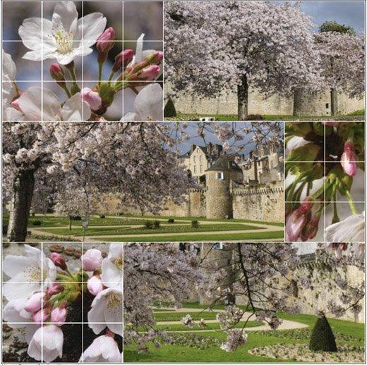 Prunus en fleurs devant les remparts de Vannes